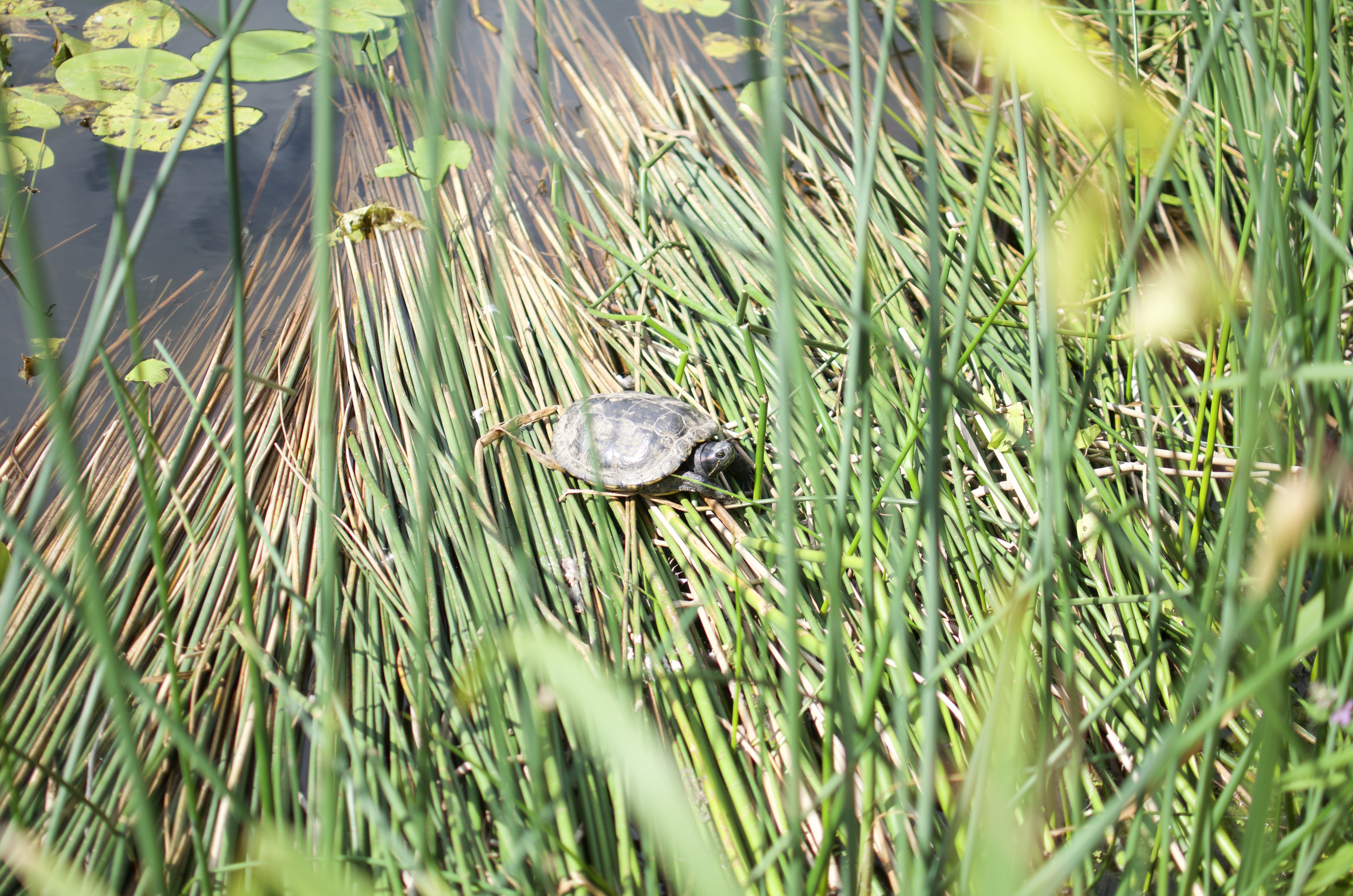 turtle botanical gardens