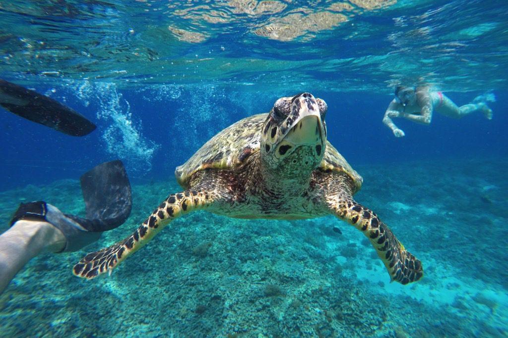 sea turtle Gili islands
